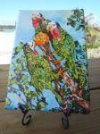 Abaco Parrots mini