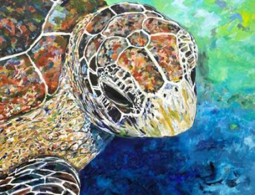 Sea Turtle Tuesday: Bling