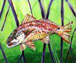 Redfish from Key Largo