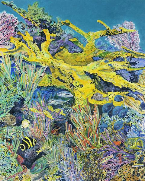 Reef Scenes