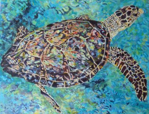 Sea Turtle Tuesday:  Kris' Turtle